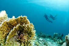 Free Scuba Divers Swims Over Coral Reef Stock Images - 24110414