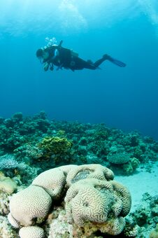 Free Scuba Diver Swims Over Coral Reef Stock Image - 24110471