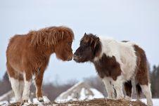 Free Pony Smooch Royalty Free Stock Photography - 24110887