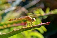Free Dragonfly Stock Photo - 24111600