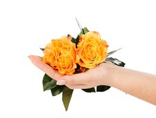 Free Yellow Roses On A Female Hand Royalty Free Stock Image - 24114236