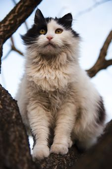 Free Cat In Tree Royalty Free Stock Images - 24116519