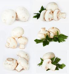Free Champignon Stock Photo - 24117670