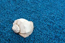 Free Whelk  Shell Royalty Free Stock Images - 24119189