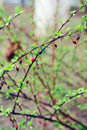 Free Dry Fruits Left Over Winter On Barberries Plant Royalty Free Stock Photo - 24122015