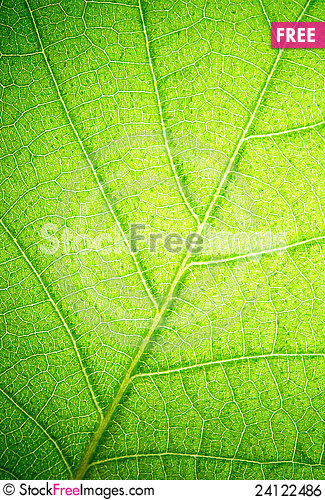 Free Leaf Royalty Free Stock Image - 24122486