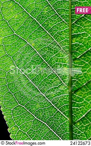 Free Leaf Close Up Stock Photos - 24122673