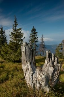 Free Standing Dead Trees Royalty Free Stock Image - 24120456