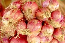 Free Shallot Royalty Free Stock Photos - 24128708