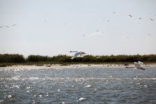 Swans Flying In Danube Delta Landscape