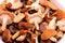 Free Mushrooms Royalty Free Stock Image - 24120196
