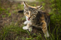 Free Funny Little Cat Royalty Free Stock Photography - 24135887