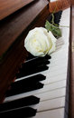 Free Piano Keyboard Royalty Free Stock Photo - 24138675