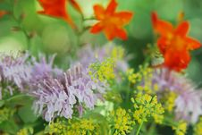 Free Herbal Flower Arrangement In Pastel Colors Royalty Free Stock Photography - 24133457