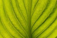 Free Green Leaf Stock Photo - 24134420