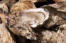 Free Oyster Crustacean Royalty Free Stock Images - 24138429