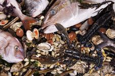 Free Mixed Fish And Sea Food Royalty Free Stock Image - 24138846