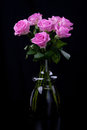 Free Roses Royalty Free Stock Images - 24143919