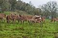 Free Herd Of Deer Stock Photography - 24144382