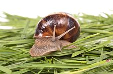 Free Snails Stock Images - 24140184