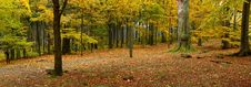 Free Deep In Woods &x28;panoramic&x29; Royalty Free Stock Images - 24141479