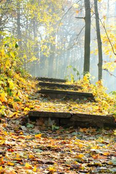 Free Sunlight On The Stairway Under The Leaves Royalty Free Stock Images - 24145039