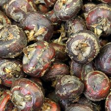 Free Water Chestnut Royalty Free Stock Photos - 24146098