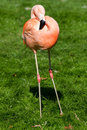 Free Flamingo Stock Image - 24157401