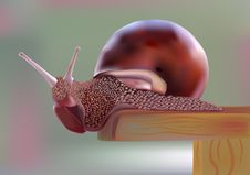 Free Snail Stock Image - 24154661