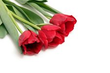 Free Three Tulips Stock Image - 24159141