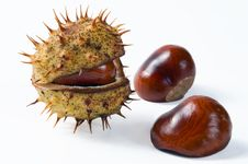 Free Chestnuts Stock Photos - 24161053