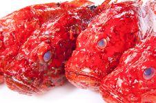 Free Red Scorpinfish Stock Photos - 24167983