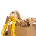 Free Bunny In A Gift Box With A Yellow Ribbon Stock Image - 24179841