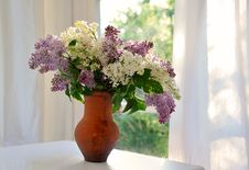 Free Lilac In Jug Stock Photography - 24173982