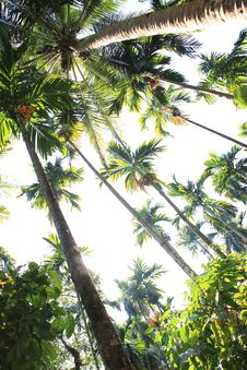 Free Coconut Palm Trees And Sky With The Sun Royalty Free Stock Images - 24174669