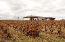 Free Beautiful Winter Vineyard In Spain Stock Images - 24175254