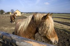 Two Brown Horses In The Corral Stock Photo