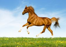 Free Chestnut Horse Gallops In Field Stock Photos - 24176453