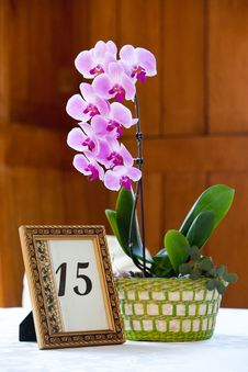 Free Orchid Centerpiece Stock Images - 24177264
