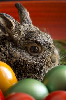 Free Easter Eggs And Bunny Royalty Free Stock Images - 24178749