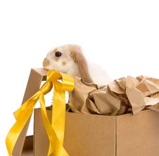 Bunny In A Gift Box With A Yellow Ribbon Stock Image