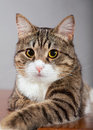 Free Domestic Cat Stock Photography - 24183812