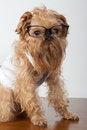 Free Serious Dog Royalty Free Stock Image - 24183816