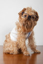 Free Serious Dog In Glasses Stock Photography - 24183822