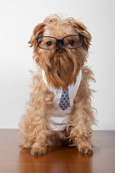 Free Serious Dog In Glasses Stock Photos - 24183823