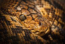 Free Python Stock Photo - 24185740
