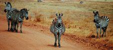 Free Bare Code In Serengeti Royalty Free Stock Image - 24186706