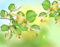 Free Abstract Background Of A Linden Garden Royalty Free Stock Photo - 24193625