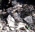 Free Garter Snake Den Royalty Free Stock Photo - 2428935