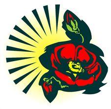 Free Rose In Black Stock Photos - 2422153